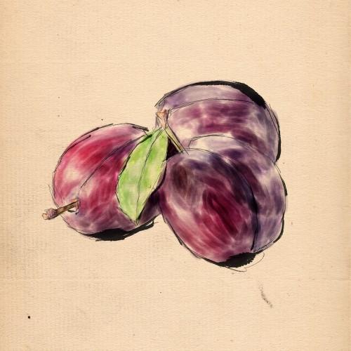 couleur prune
