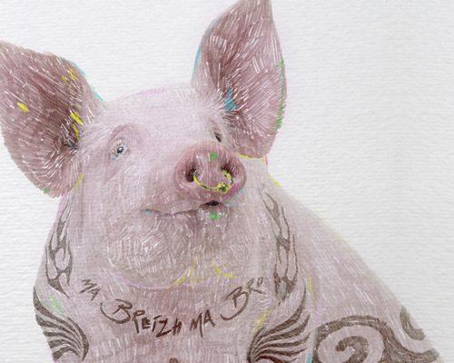 cochon dessin kimkom